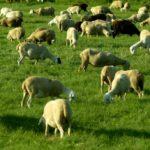 Oración para librar el ganado de ataques de depresadores. a Dios